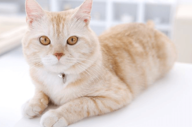 10 Rare Cat Coat Colors (Some Are Freaky!) | Pawsome Kitty
