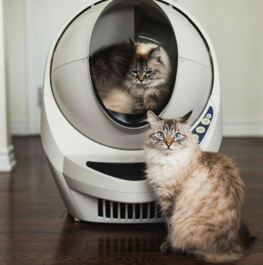 & Best Automatic Cat Litter Box Reviews 2018 | Pawsome Kitty Aboutintivar.Com