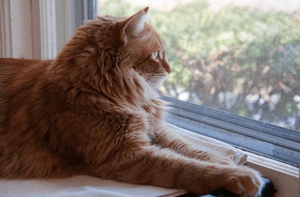 Weruva Cat Food Diabetes