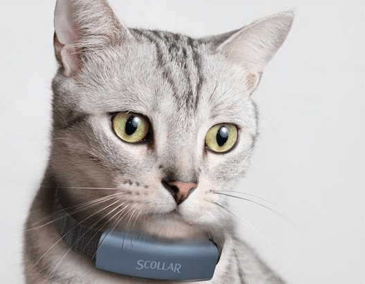 7 Best Gps Cat Collars Reviews Updated 2018 Pawsome Kitty