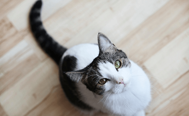 Best Dust Free Cat Litter Reviews Low Dustless Pawsome
