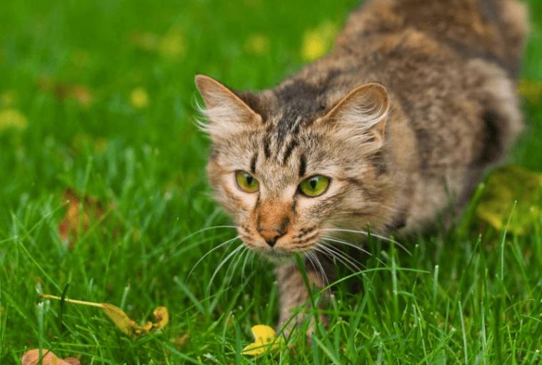 how to stop cat from scratching door